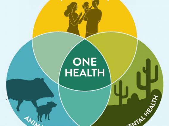 One health graphic
